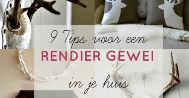 tips rendier gewei